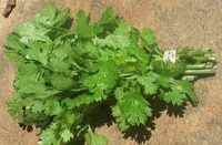Parsley__italian2